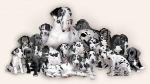 www.dogy.estranky.cz
